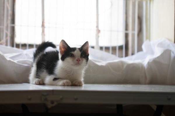 Петрушка кот