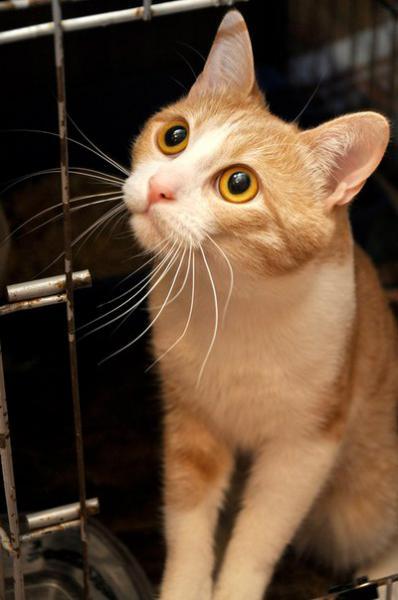 Левчик кот